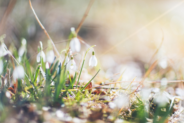 Andrea_Berlin_Spring_Vårblommor-0155