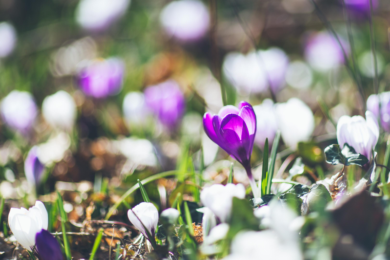 Andrea_Berlin_Spring_Vårblommor-0172