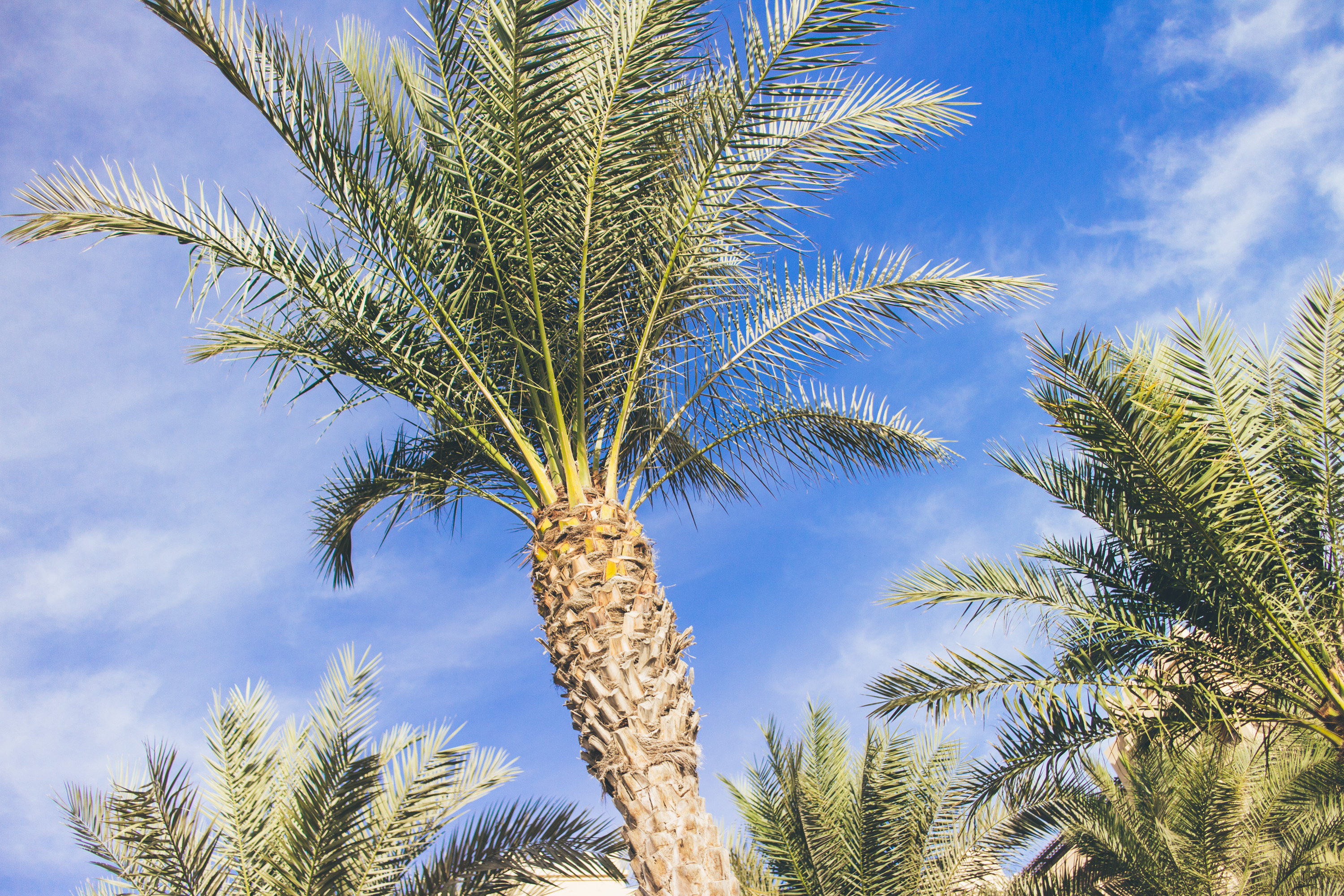 Andrea_Berlin_Fairmont_the_palm_Dubai-2177