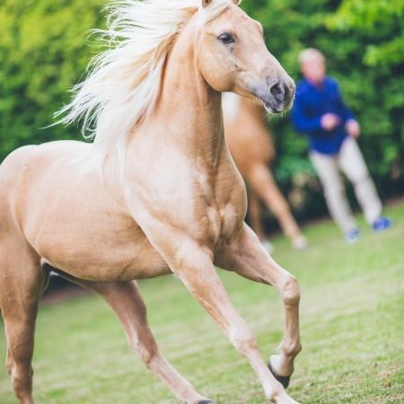 Andrea_Berlin_Quarter_Horses_Tobbe_Larsson-9784