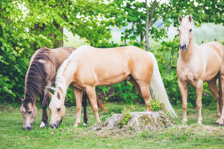 Andrea_Berlin_Quarter_Horses_Tobbe_Larsson-9786